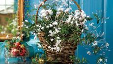 jasmin parfum plante chambre à coucher