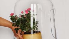 lampes design original avec plantes