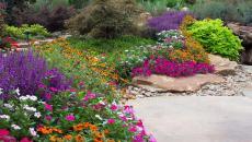 fleurs vivaces plantes fleuries couleurs maison jardin