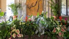 intérieur design luxe plantes vertes