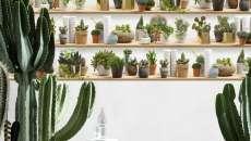 papier peint trompe l'œil déco cactus murs