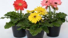 fleurs plantes purifient l'air salle de bain vapeur