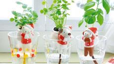plantes vertes épices pots de fleurs autoarrosants