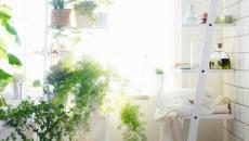 Plantes vertes et fleurs en déco dans une salle de bain